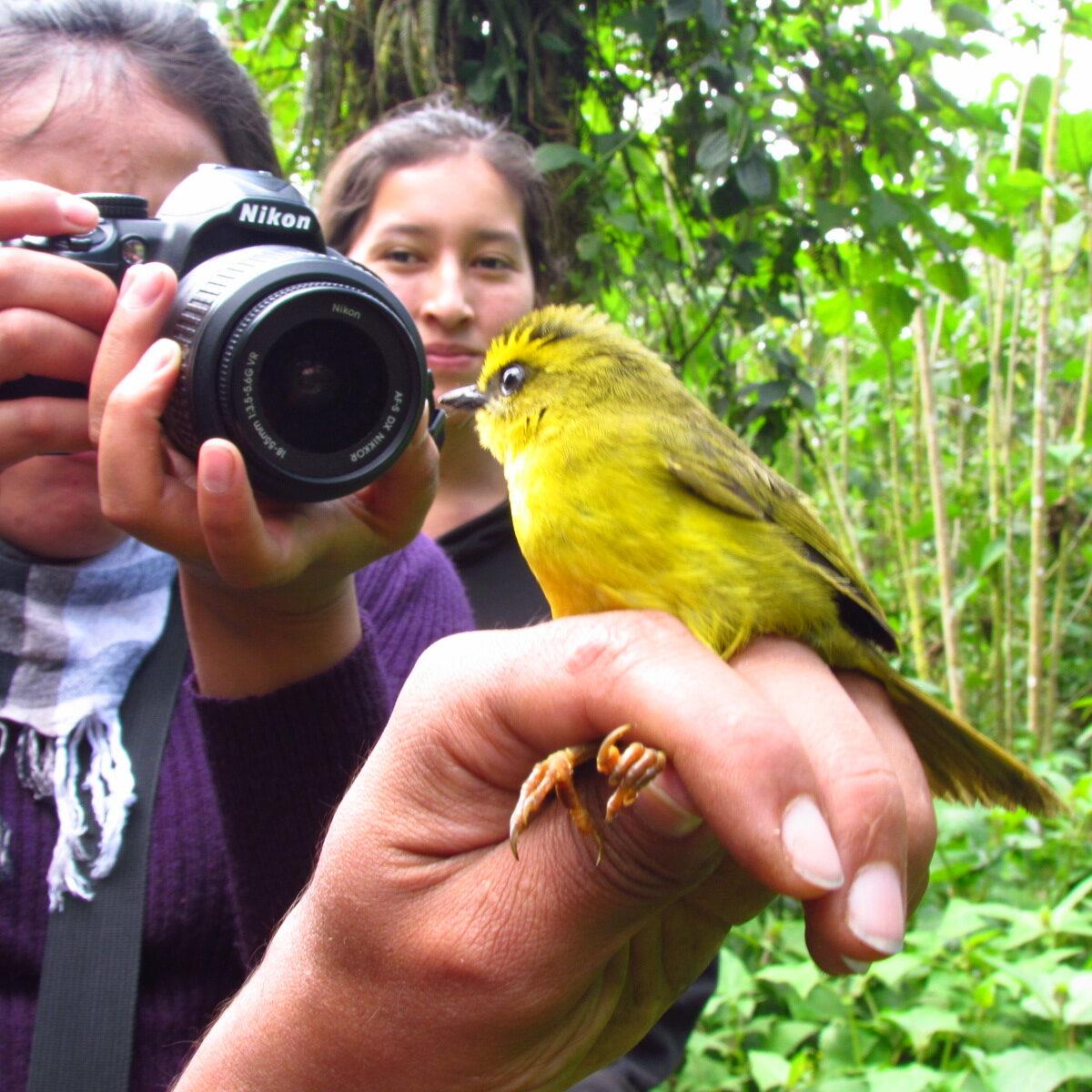 Proyecto Aves Urbanas de Cochabamba